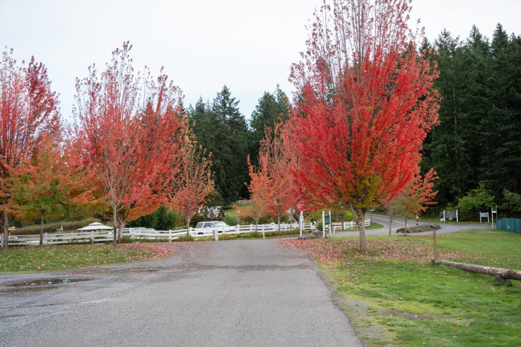 Red trees at resort entrance